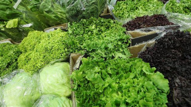 Vertical farm start-up Plenty raises $200m