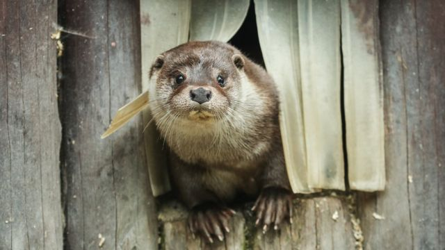 An otter in the Moscow Zoo