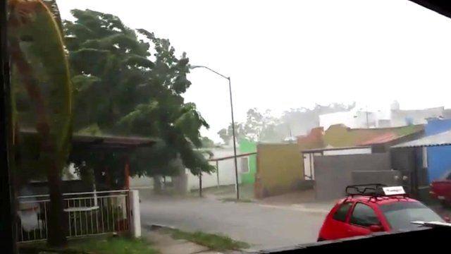 Winds hit trees in Manzanillo
