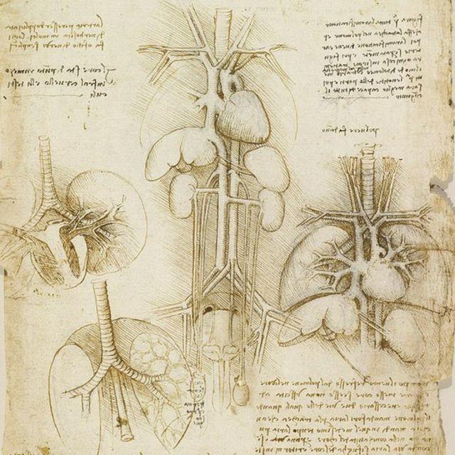 Estudios del corazón hechos por Leonardo Da Vinci alrededor de 1508.