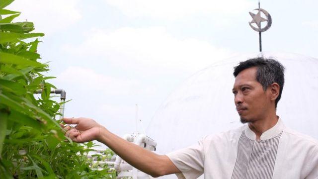 MB Farm, hidroponik, Masjid Baitussalam, Tamansari, Jakarta Barat