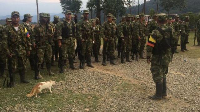 Abarwanyi ba nyuma ba FARC bariko bigishwa imbere yo kuaj mu makambi