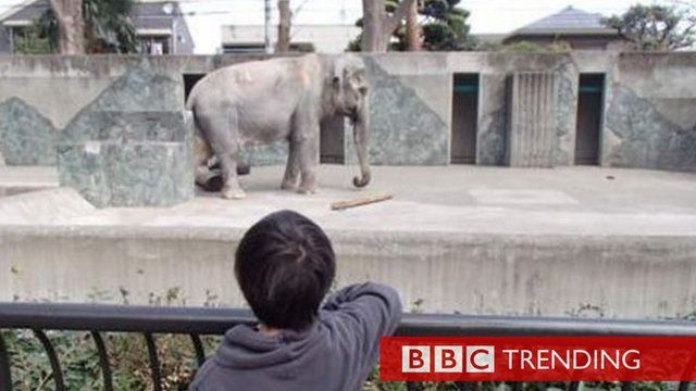 Image of an elephant in a zoo