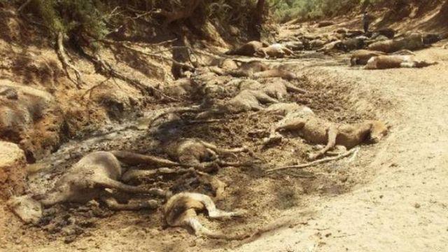 Dezenas de cavalos mortos em poço seco na cidade de Alice Springs, na Austrália