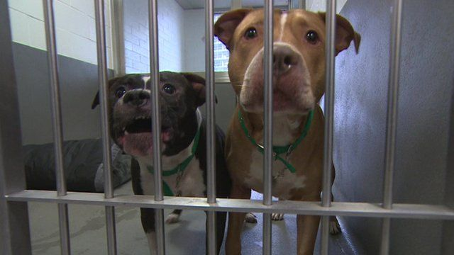Two dogs kept at Battersea Dogs and Cats Home