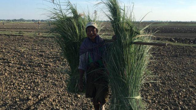 Farmers in Myangyan