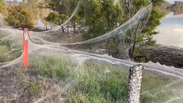 Uma teia cobre a vegetação perto de uma cidade australiana atingida por fortes chuvas