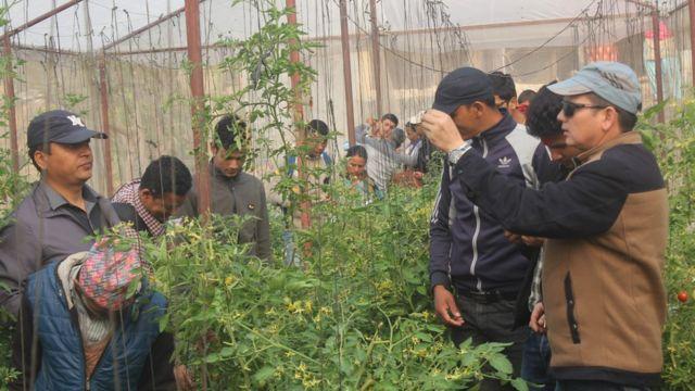 तरकारी उत्पादन गर्ने प्रविधि सिक्दै कर्णालीका किसानहरु