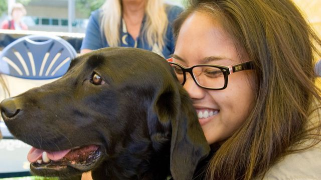 Dogs 'prevent stressed students dropping out'
