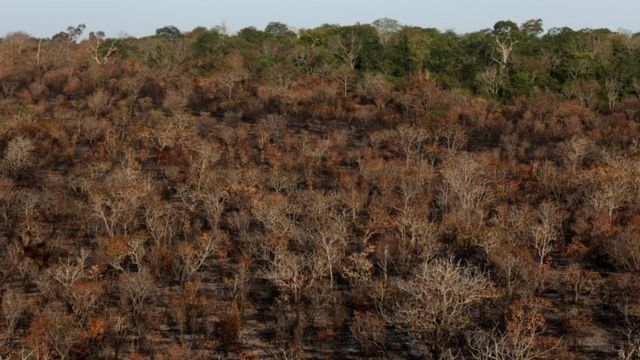 A burnt area of Amazon forest near Alter do Chao is pictured in Santarem