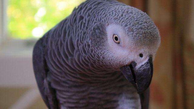 Le perroquet a répété plus tard les mots « ne tire pas » prononcés par la victime lors des faits.