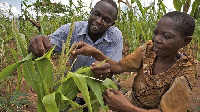 Mkulima Consolata akikagua mavuno yake karibu na Kibiti wilayani Rufiji eneo la pwani Tanzania