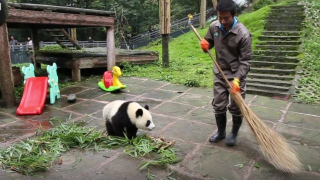 Panda and nanny