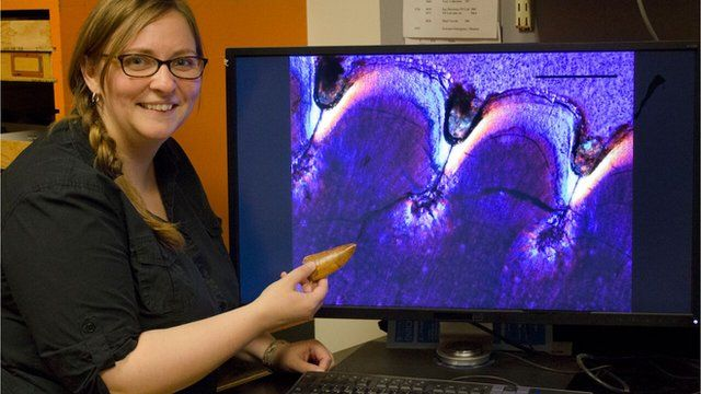 Lead author Kirstin Brink, University of Toronto Mississauga, with the tooth and thin section of the large theropod Carcharodontosaurus