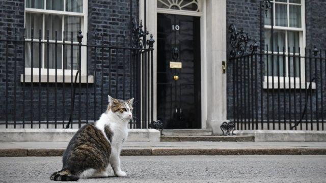 El gato Larry frente al número 10 de Downing Street en Londres.