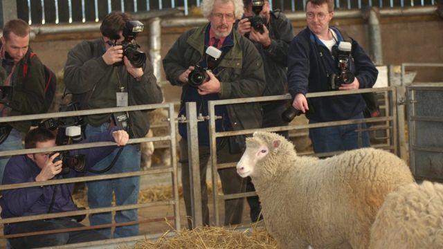 Oveja Dolly rodeada de fotógrafos