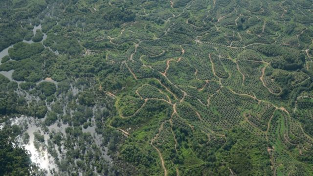 Roads and plantations fragment forest habitat in Borneo (c) Marc Ancrenaz