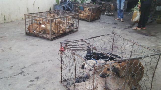Daging Anjing