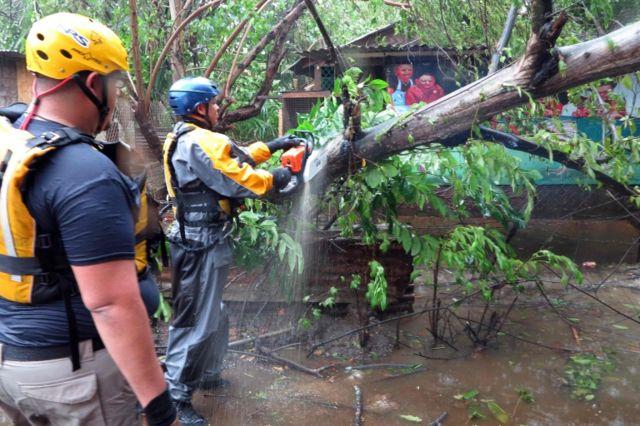 Cuerpos de asistencia en Fajardo, Puerto Rico, despejan un árbol caído.