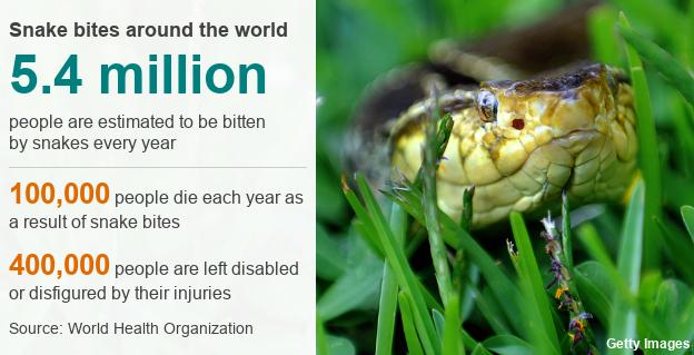 Snake bites around the world