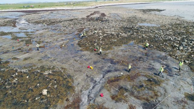 'Incredibly rare' find in Western Isles prehistoric forest