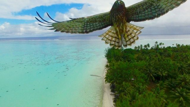 A bird flies over an island