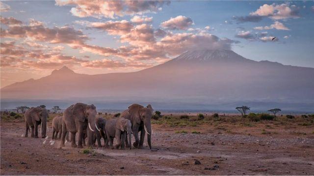 Kaynta Amboseli waxay caan ku tahay Maroodiga iyo muqaalka buurta Kilimanjaro