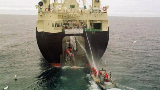 Navio baleeiro científico japonês puxando uma baleia