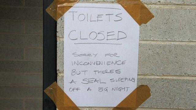 Надпись на туалете, где спал Сэмми