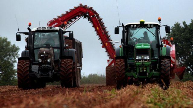 チェイス・ウオツカの原材料となるジャガイモの収穫