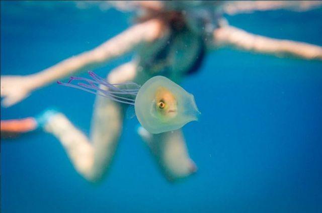 Mujer nada cerca de una medusa que tiene adentro un pez.
