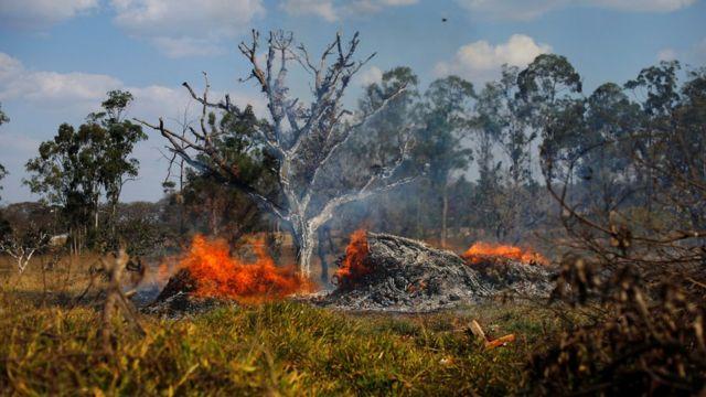 Devastación en Brasilia causada por los incendios forestales que sufre Brasil.