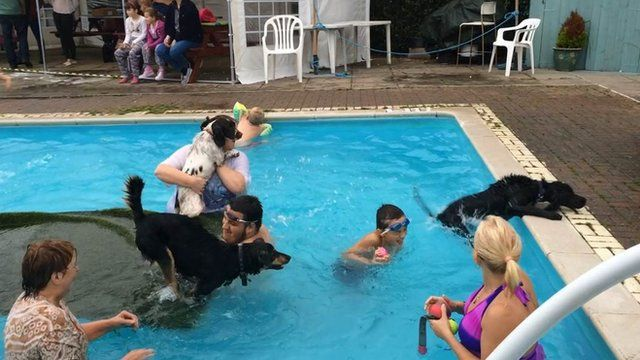 Heckington Swimming Pool Runs Sessions For Dogs And Owners Bbc News