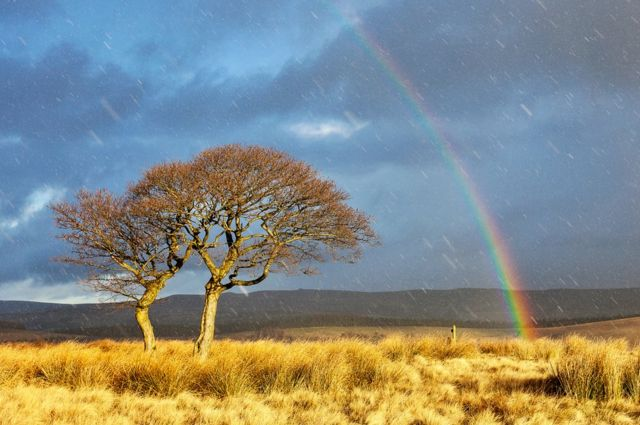 Mat Robinson: arcoíris