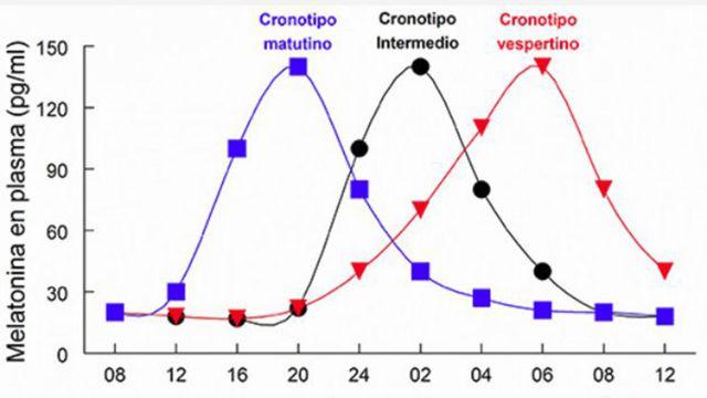 Gráfico com os diferentes cronotipos