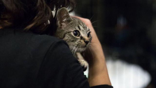 Mačka u naručju