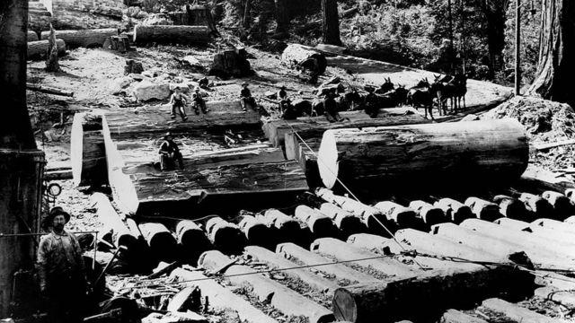 Aserradores a finales del siglo XIX trabajando en una de las madederas en California