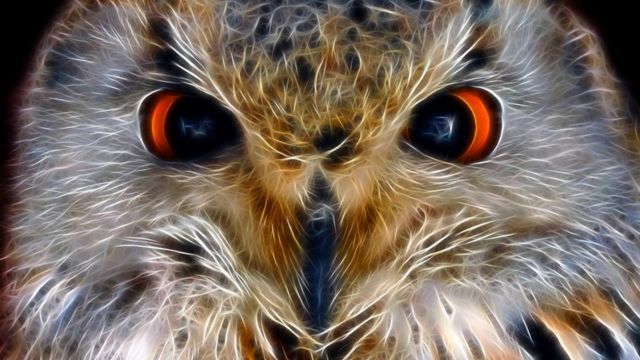 Burung hantu tidak disukai di abad pertengahan