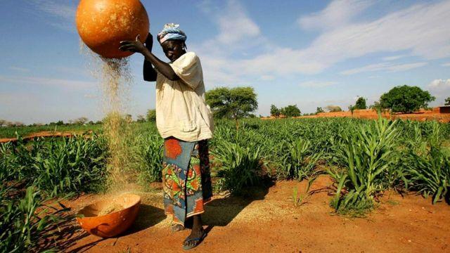 Ведущие натуральное хозяйство крестьяне в случае катастрофы будут иметь преимущество над всеми остальными людьми, поскольку ни от кого не зависят
