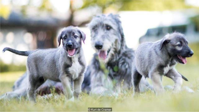 Cachorros gemelos con madre