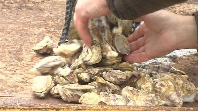Porlock Bay oysters, Somerset