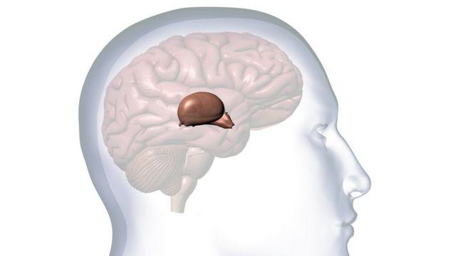 Ilustracije mozga
