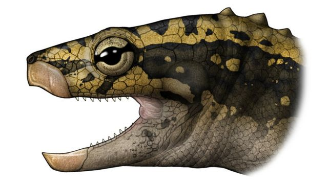 Artist's impression of how the triassic turtle looked