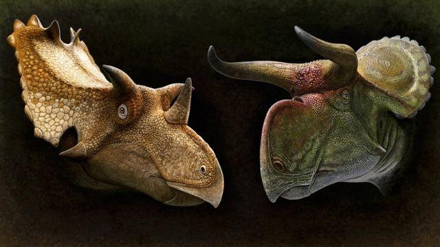 कलाकारले बनाएका सेराटोप्सिएन डाइनसोरका दुई प्रजातिका आकृति