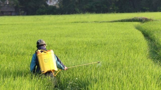 Việt Nam sẽ phải sản xuất lúa sạch dùng ít phân hóa học sử dụng ít thuốc trừ sâu hơn