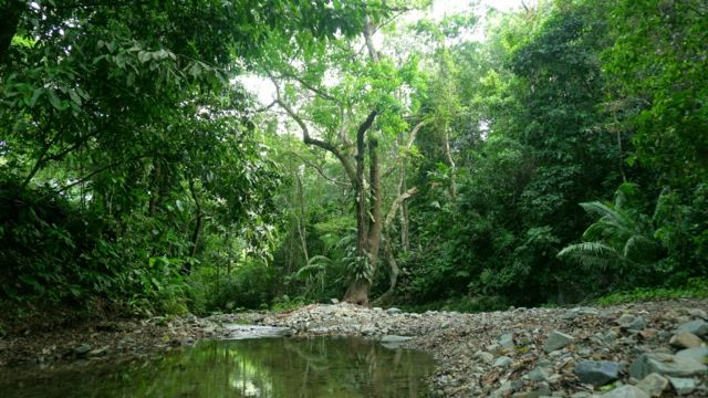 Selva del Darien