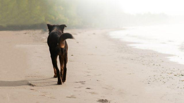 Un perro negro caminando en una playa.
