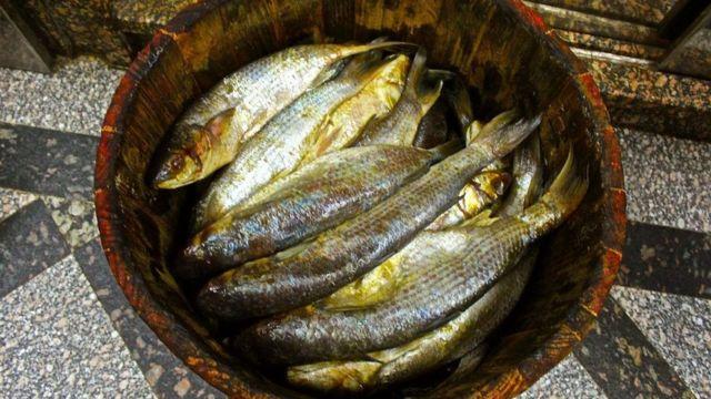 سمك الفسيخ
