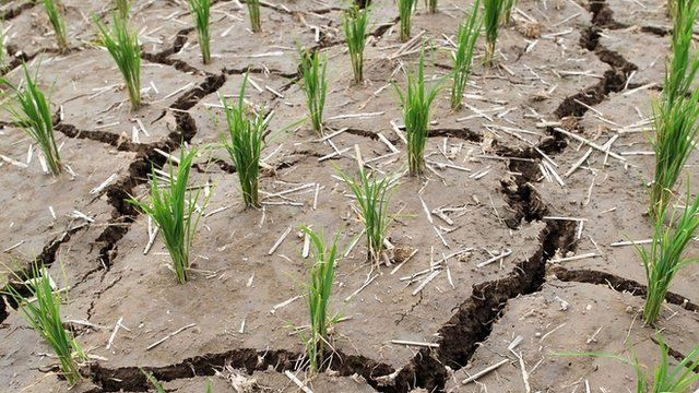 A rice paddy is cracked from a long drought in Paju, South Korea