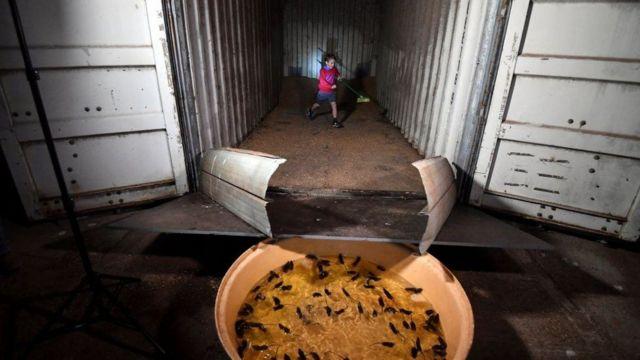 Bazı çiftçiler konteynerleri dev tuzaklara dönüştürmüş ama bu da yeterli olmuyor